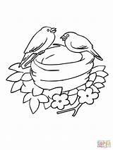 Nido Colorare Disegno Bluebird Disegni Coloring Uccellini Bambini Bird Kolorowanka Uccelli Immagini Mountain Gniazdo Template Nesting Printable Alberi Colorato Eastern sketch template