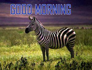 Morning Animal Wallpaper - 189 animal morning images photo pictures