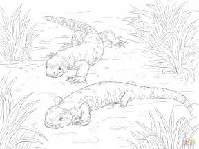 Beaded Lizard And Gila Monster Coloring Page Free