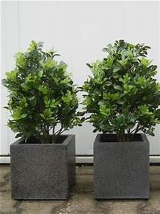 Wetterfeste Kunstpflanzen Balkon : kunstpflanzen mit uv beschichtung ~ Michelbontemps.com Haus und Dekorationen