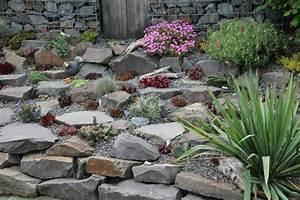 Steine Für Steingarten : kakteenforum lithopsforum und sukkulentenforum von thomas ~ Lizthompson.info Haus und Dekorationen