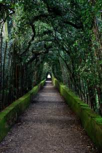 Tree-Lined Garden Path