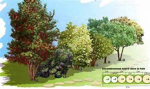 Arbre Ombre Croissance Rapide : beautiful arbre pour haie croissance rapide 9 arbres a ~ Premium-room.com Idées de Décoration