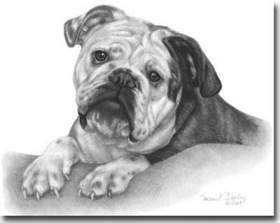 shading  art google search bulldog art english bulldog bulldog