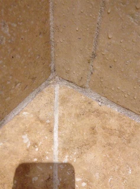 moisissure joints salle de bain moisissure salle de bain joint obasinc