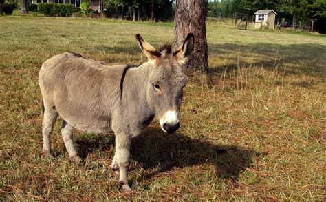 Miniature Donkey Farmer Makes Us Want To Run Out And Get ...