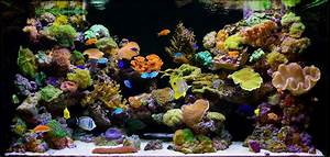 Saltwater Marine Reef Aquariums