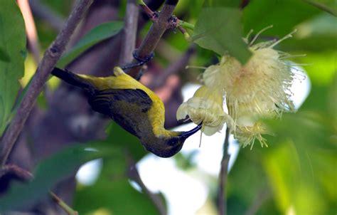 fantastis 25 gambar burung hinggap di pohon