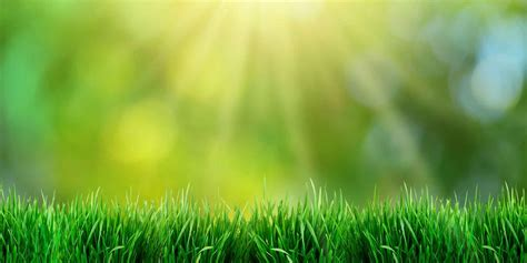 Growing Green Grass: How to Have a Perfect Lawn | ReviewThis