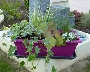 Plantes D Hiver Extérieur Balcon : plantes jardiniere balcon hiver pivoine etc ~ Nature-et-papiers.com Idées de Décoration