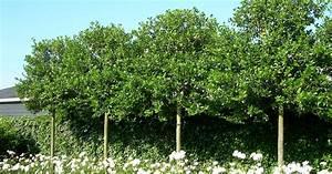 Immergrüne Sträucher Und Bäume : immergr ne b ume und str ucher ~ Michelbontemps.com Haus und Dekorationen