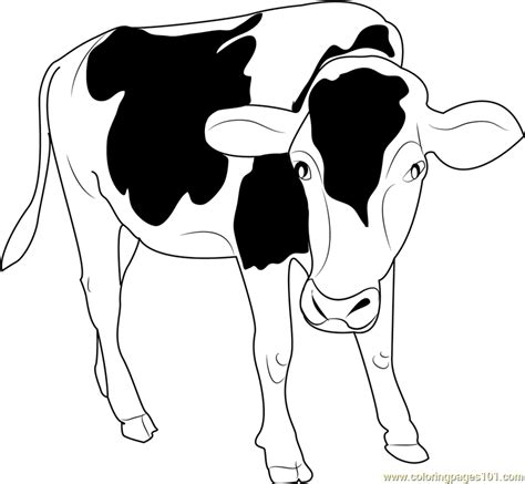black and white coloring pages black and white cow coloring page free cow coloring