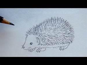 Zeichnen Lernen Mit Bleistift : zeichnen lernen igel zeichnen einfache anleitung tiere mit bleistift zeichnen diy ~ Frokenaadalensverden.com Haus und Dekorationen