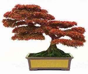 Bonsai tips from an Atlanta master - Atlanta Magazine