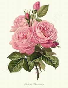 25+ Best Ideas about Vintage Flower Prints on Pinterest ...