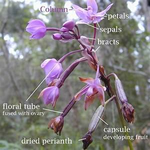Botany  Plant Reproduction Laboratory Flower