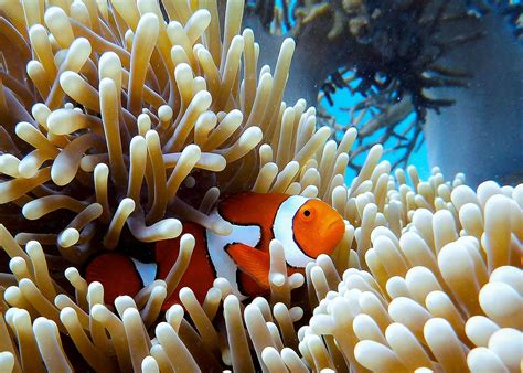 Inspiration | Colour Therapy | The Great Barrier Reef - Superyacht Charter | Ocean Alliance
