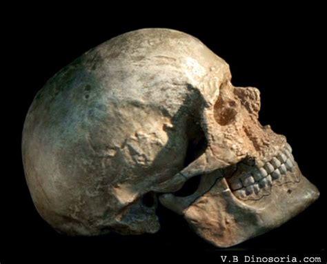 apparition de l homme moderne passions et partage pr 233 histoire sapiens