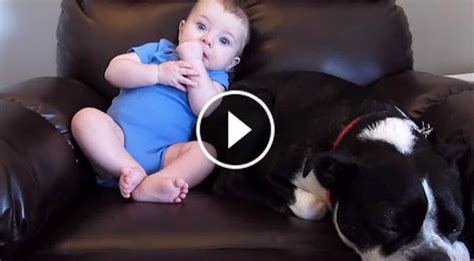 baby poops  pants   dogs reaction  priceless