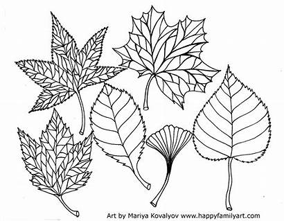 Coloring Leaves Pages Autumn Nature Colouring Leaf