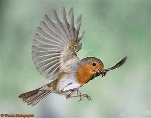 17 Best images about Birds/movement on Pinterest ...