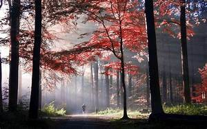 nature, , landscape, , sunlight, , mist, , morning, , fall, , park, , trees, , sun, rays, , path, , colorful, , running