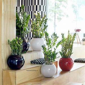 Plantes Et Jardin : zamioculcas plantes et jardins ~ Melissatoandfro.com Idées de Décoration