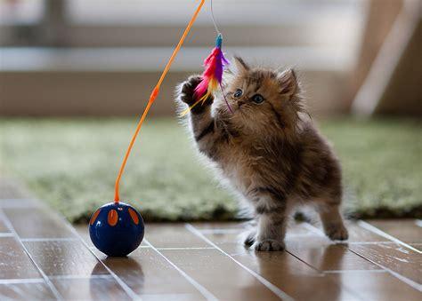 Spiele Für Katze