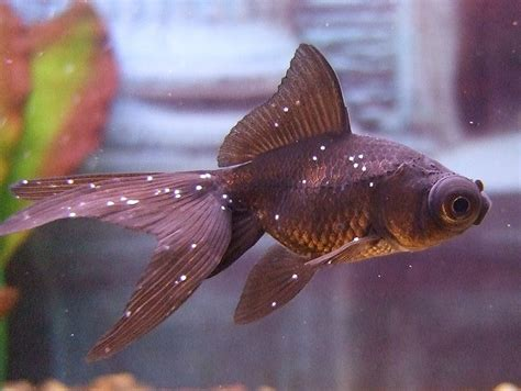 exotic tropical fish photography  high