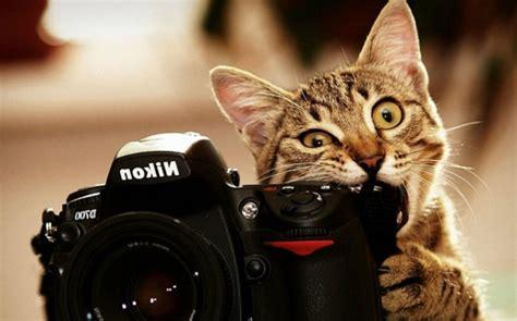 Cat Wallpapers  Most Hd Wallpapers Pictures Desktop