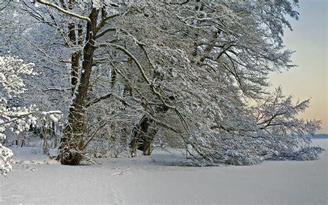 Weihnachtsbaum Weiß Geschmückt by Die 83 Besten Weihnachten Wallpapers