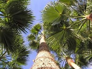Bilder Von Palmen : f cher palmen auf gran canaria gran canaria ~ Frokenaadalensverden.com Haus und Dekorationen