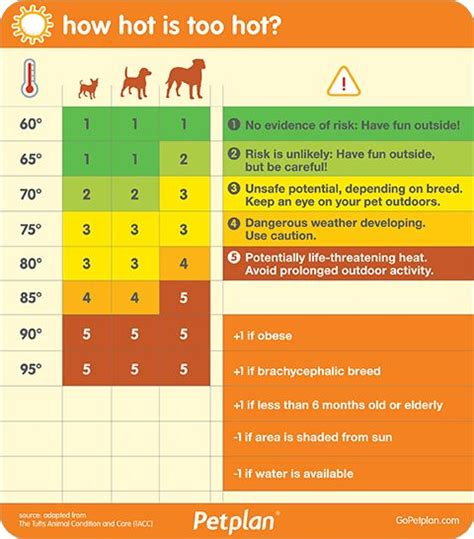 hot weather safety  pets images  pinterest
