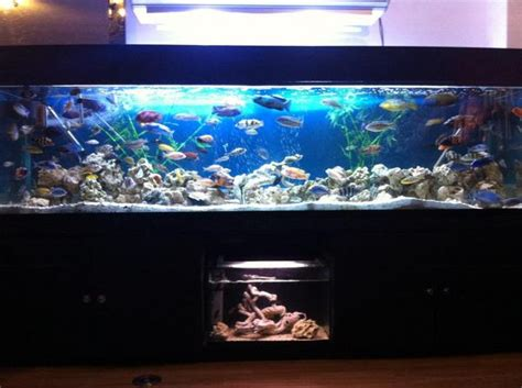 8ft fish tanks for sale 8ft x 2ft x 2ft fish tank aquarium for sale at aquarist classifieds