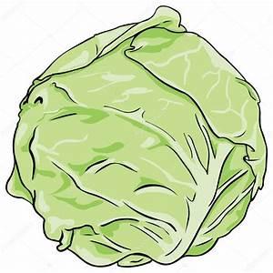 Vector cabbage — Stock Vector © nikiteev #27560061