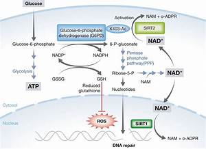 Sirt2 Controls The Pentose Phosphate Switch