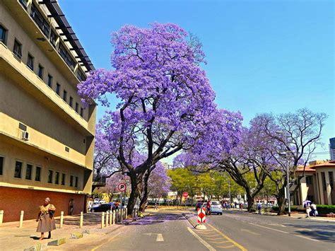 Photo Gallery Of Pretoria