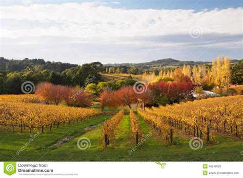 Colorful Autumn In Adelaide Hills Wine Region Stock Photo Rounded Corner Business Card Psd Photoshop Tutorial Gold Free Acrylic Paper Weight Make A On Word 2010 To Outlook Contact Software