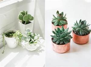 Pot Pour Plante : la succulente plante grasse mademoiselle claudine le blog ~ Teatrodelosmanantiales.com Idées de Décoration
