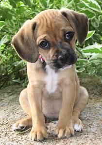 Puppy Love | Matrignosis: A Blog About Inner Wisdom
