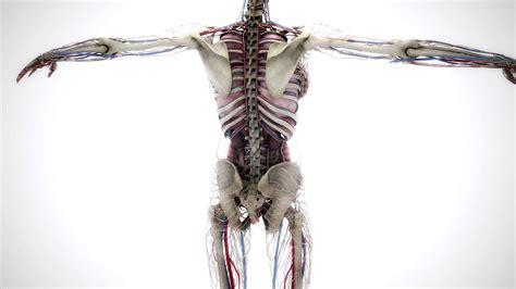V-ray Rt Gpu 2.4 Animation The Human Body 3d