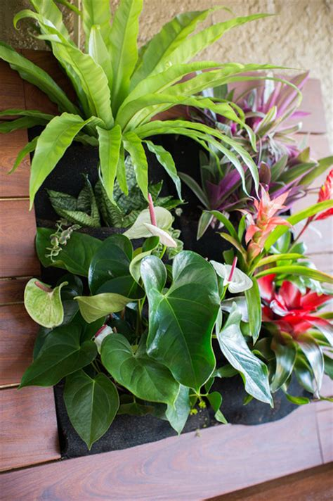 vertical gardening tropical landscape san diego