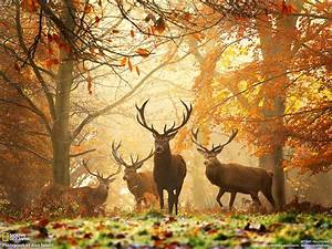 Fall Fairyland Forest - Decor to Adore