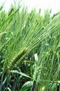 Traitement Mauvaise Herbe : identification des plantes des mauvaises herbes ligneuses ~ Melissatoandfro.com Idées de Décoration