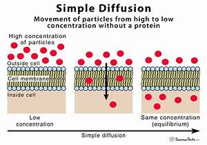 Simple Diffusion  U2013 Definition With Examples And Diagram