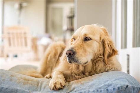 wasserdichte hundebetten arthrose hundde