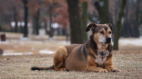Clickertraining Für Hunde