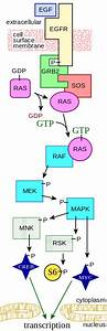 File Mapkpathway Diagram Svg