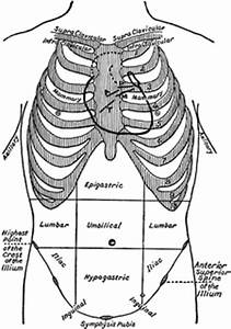 Thoracic And Abdominal Regions