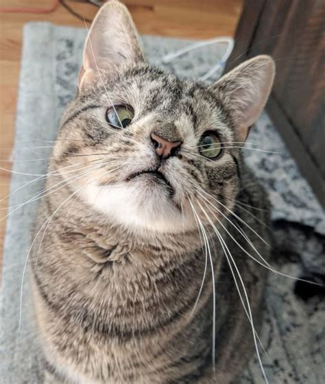 Signs & Abnormalities Linked To Down Syndrome In Cats ...